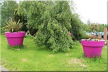 NX9575 : Flower Pots at Garden Wise, Dumfries by Billy McCrorie