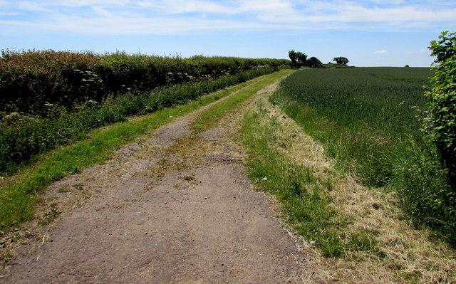 Field track near Acton Turville