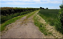 ST8080 : Field track near Acton Turville by Jaggery