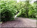 SJ9593 : Footbridge in Gower Hey Woods by Gerald England