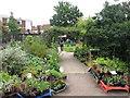 TQ3383 : St Mary's Secret Garden, Hoxton by David Hawgood