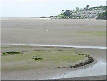 SH5738 : Alarch dof [mute swan], Glaslyn estuary by Christine Johnstone