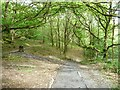 SH6541 : Footpaths, Coed Llyn Mair by Christine Johnstone