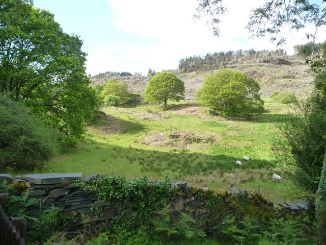 Sheep pasture, north of Tan y Bwlch station
