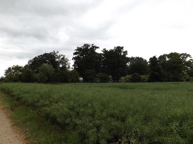Osierbed Plantation at Shelfanger Hall