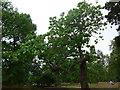 TQ1877 : A summer stroll around Kew (19) by Basher Eyre