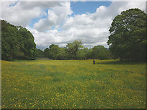 NY6715 : Meadow beside Scale Beck by Karl and Ali