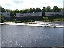 SJ4065 : River Dee [1] by Michael Dibb