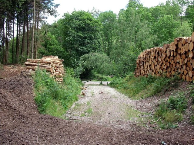 Timber stacks by the Staffordshire Way in Stoney Dale