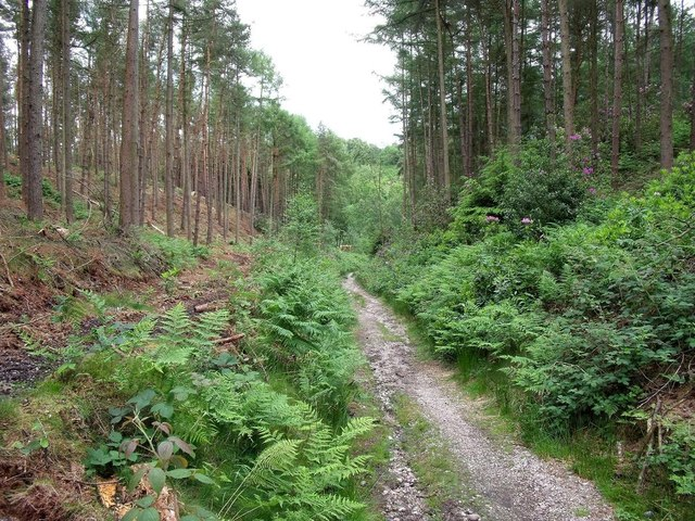 Before and after tree thinning in Sutton's Wood