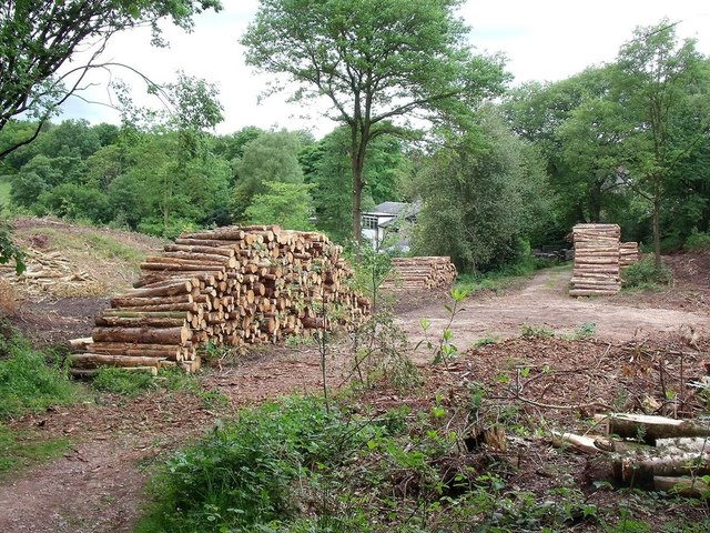 Timber stacks and tree clearance in Sutton's Wood