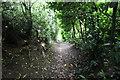 SJ5966 : Sunken path near The White Hall by Jeff Buck