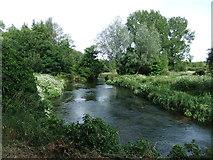SU4828 : River Itchen by David Brown
