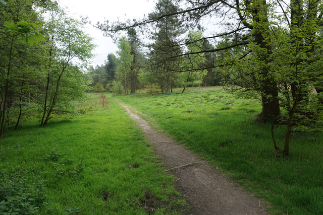 Path through a forest clearing