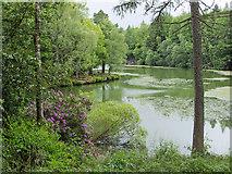 NT4227 : The Upper Lake, Bowhill by Julian Paren