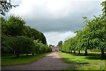 SJ8141 : Whitmore: avenue to Whitmore Hall by Jonathan Hutchins