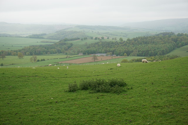 Sheep grazing land above the Derwent valley