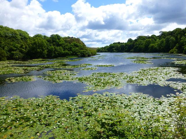 Bosherton Lily Ponds