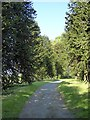 SS6040 : Avenue of monkey puzzle trees at Arlington Court by David Smith