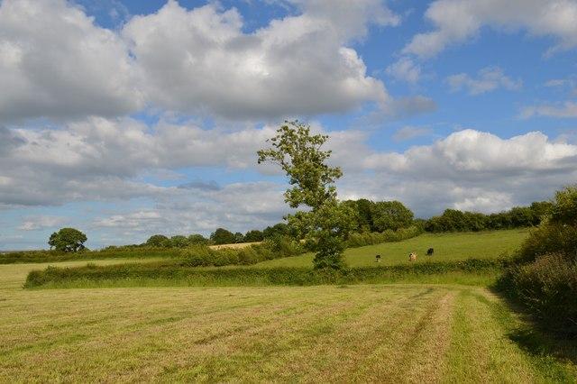 Audley: field corner on Kent Hill