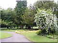 SO9685 : Haden Hill Gardens by Gordon Griffiths