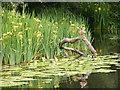 SO9585 : Haden Hill Duck by Gordon Griffiths