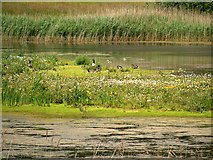 SD5830 : Meadow Lake, Brockholes Nature Reserve by David Dixon