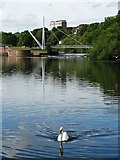 SX9192 : Swan on The Exe by Neil Theasby