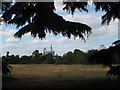 TQ3877 : Greenwich observer-tree by Stephen Craven