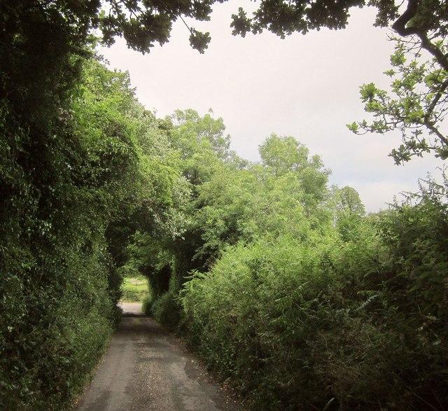 Lane from Newtown