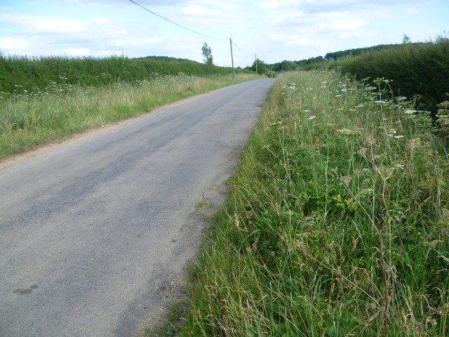 Roadside Nature Reserve alongside Holywell Road