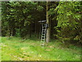 NT7214 : Deer observation platform on edge of clearing in Swinside Hall Plantation in Scottish Borders by ian shiell