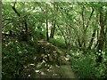 TQ3330 : Bramber Wood by Simon Carey