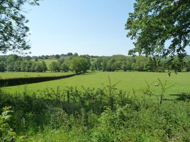 Sheep pasture, Ecclesbourne valley