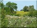 SK2848 : Wildflowers near Idridgehay by Christine Johnstone