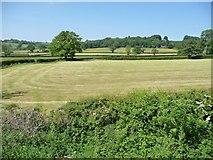 SK2850 : Farmland north of Alton Mill Farm by Christine Johnstone
