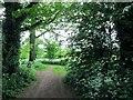 SS9614 : Track  through  woodland  at  Knightshayes by Martin Dawes