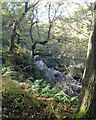 SJ9866 : River Dane in a gorge below the Dane Valley Way by Robin Stott