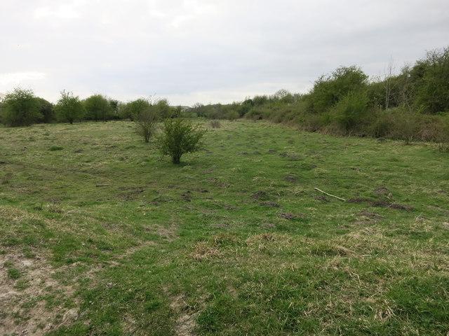 Great Wilbraham Common