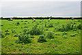 SJ9315 : Land for livestock at Lower Drayton Farm by Bill Boaden