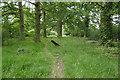 SU9675 : Treeline, Windsor Great Park by Alan Hunt