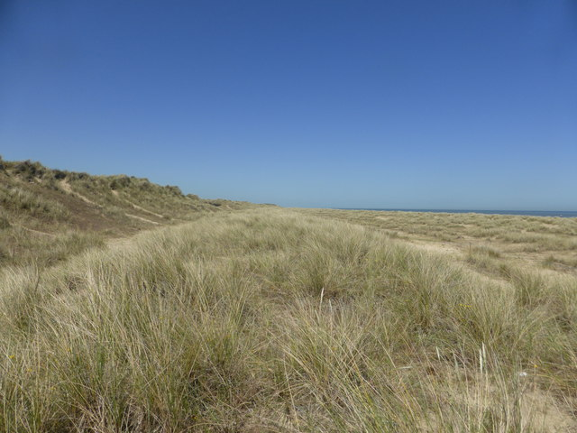 Embryo dunes, foredunes and yellow dunes - Winterton