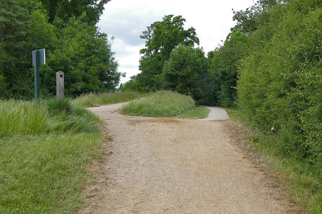 Divergent paths, Windsor Great Park