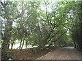 TQ2196 : Rowley Green Common by David Howard