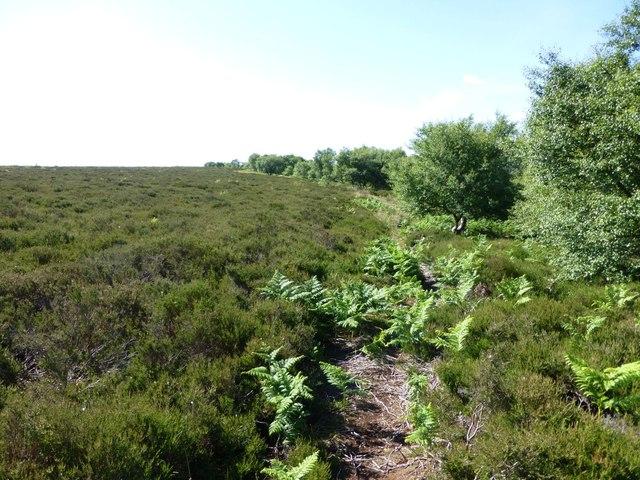 Track through bracken and heather