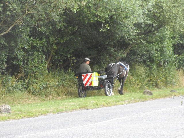 Horse and buggy on Rowley Lane