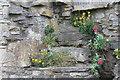 NZ1700 : Richmond Castle by Dave Pickersgill