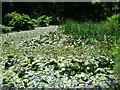TQ5137 : Pond in the gardens of Burrswood Hospital by Marathon
