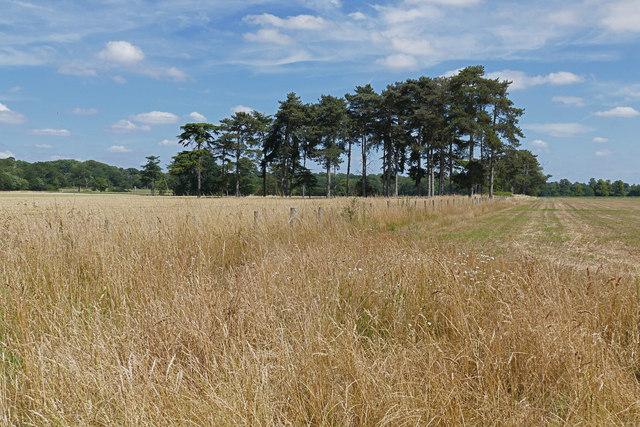 Fields near Wexham Park Hospital