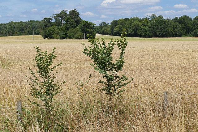 Rural landscape near Wexham Park
